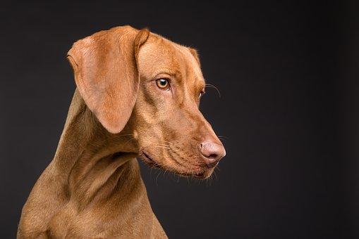 De gezondheid van uw hond, is belangrijk verzorg hem goed.