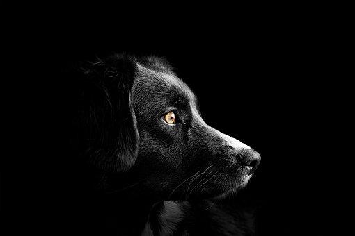 De gezondheid van uw hond, verzorg hem goed.