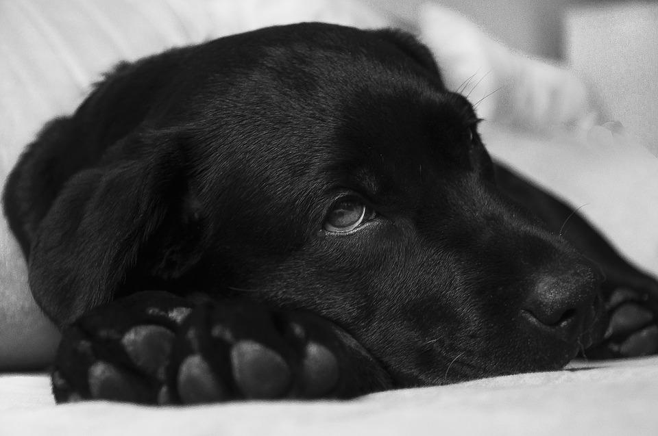 maag-darmparasiet bij honden en katten