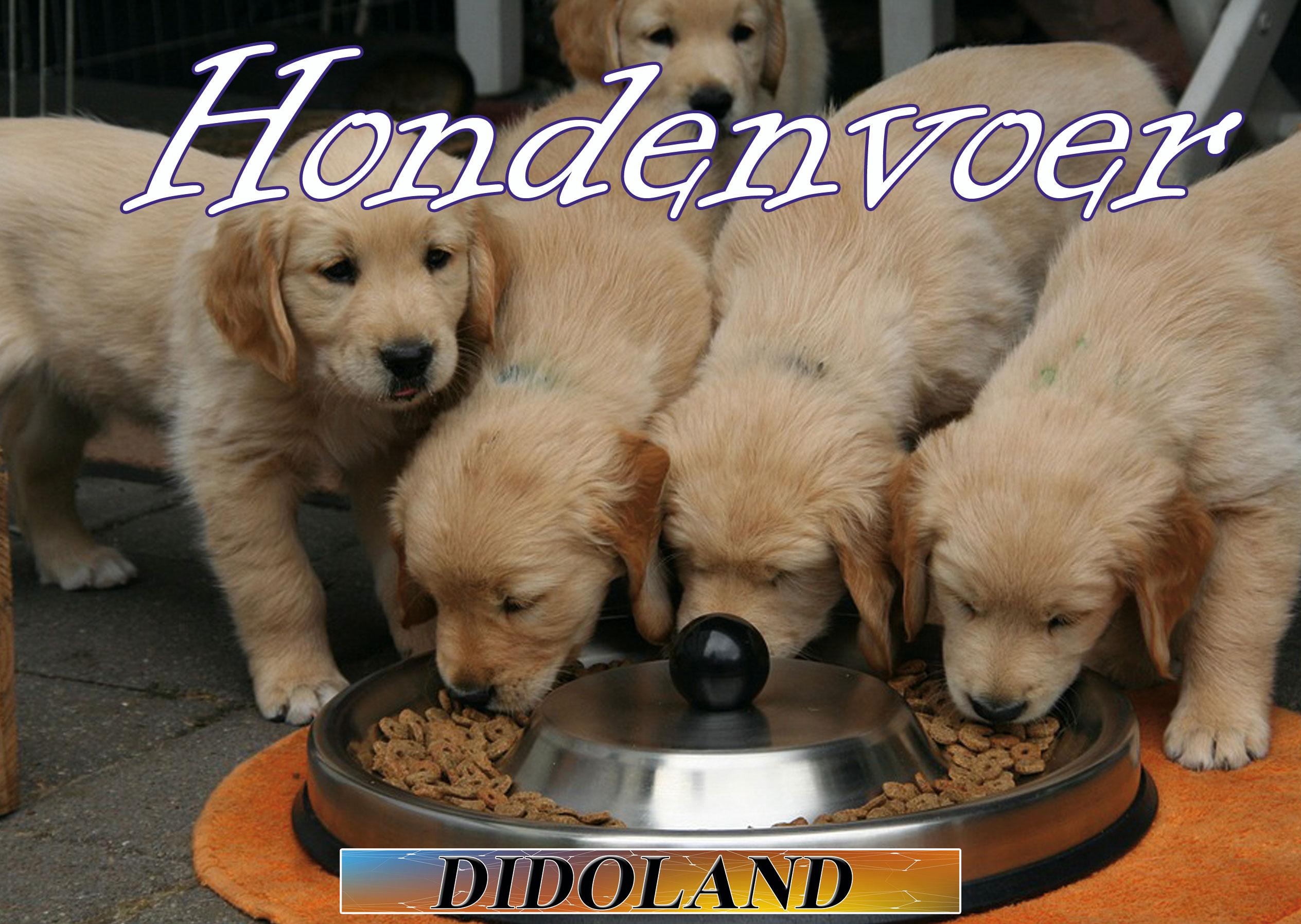 In alles voor honden is de voeding heel belangrijk. Hier vind je hondenvoer in het algemeen verder onder de foto hondenvoer in verschillende categorieën.